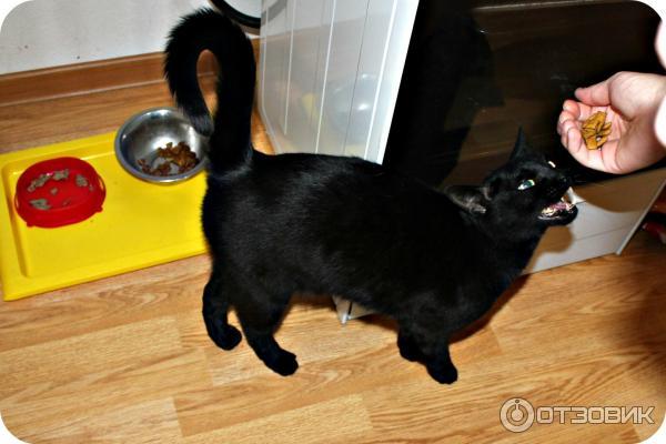 cat on catnip gif