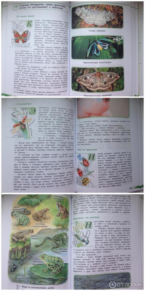 зеленые страницы его величество боровик читать онлайн бесплатно