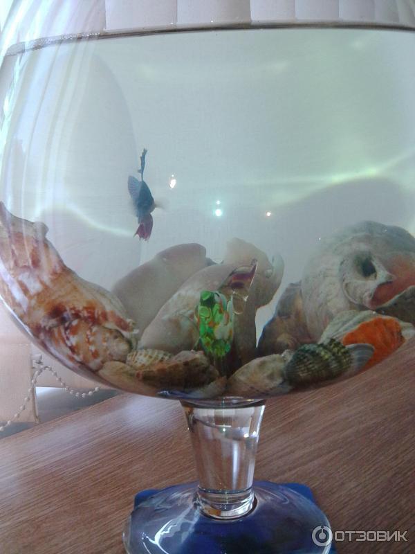 Как ухаживать за рыбкой петушок в домашних  894