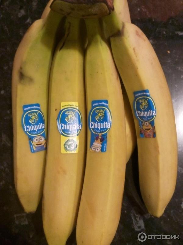 как вырастить банан дома из семян видео