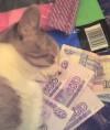 Сухой корм хиллс для кошек