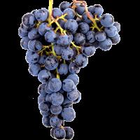 Виноградная диета: теряем 2-3 кг.