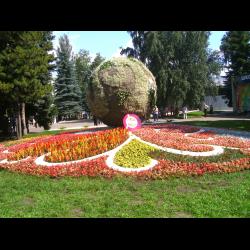 Выставка цветов омск #2