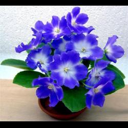 Живые цветы фиапки фото скачать песню подарок жене от мужа