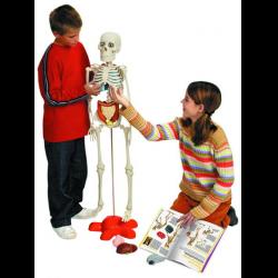 как собрать скелета артема инструкция - фото 11