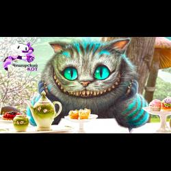Кафе кот липецк