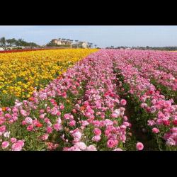 долина роз скачать торрент - фото 7