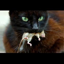 Рассказ милаха и кот громила