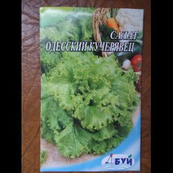 Салат кучерявец одесский выращивание из семян 5