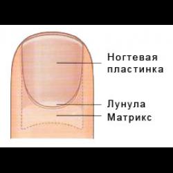 Ветеринарный препарат от грибка ногтей на ногах
