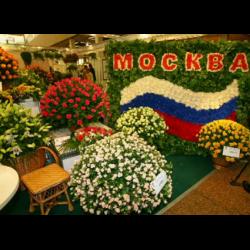 Выставка на ввц цветов