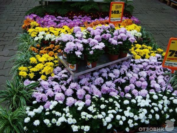Магазин оби цветы рассада
