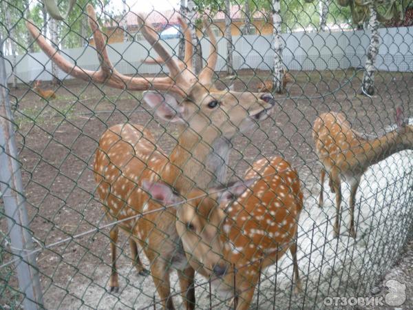 максимальной скорости цпкио екатеринбург животные фото утверждает, что
