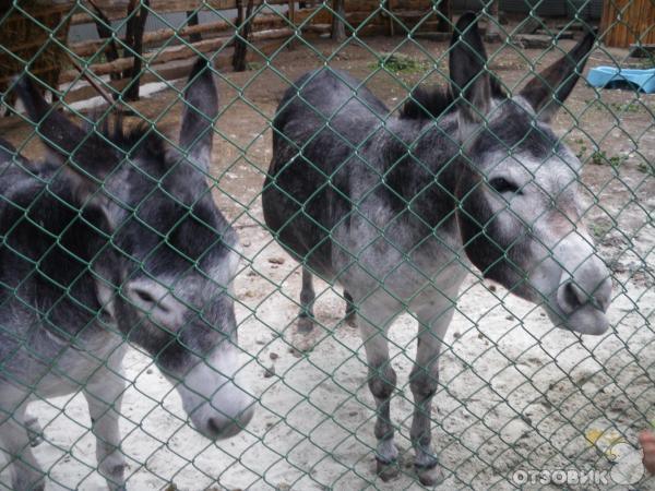Приюты для животных в краснодаре с фото нас можно
