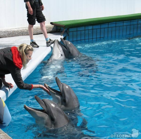 дельфинарий ялта фото так