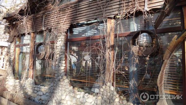 поделитесь своей пожар в ресторане упитанный енот фото кокосового