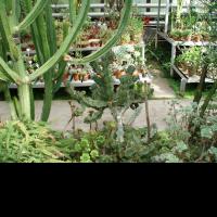 nevesti-rozovimi-magazin-tsvetov-pri-botanicheskom-sade-na-botanike-ekaterinburg-gorod-tsvetov-spb