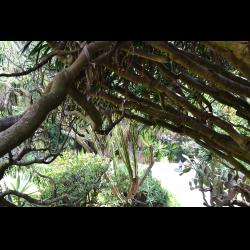 Ботанический сад Ажуда | Ландшафтный дизайн садов и парков | 250x250