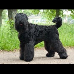 рчт фото собака